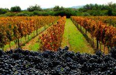 I vini della Bolivia arrivano dalle Ande