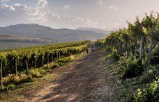 Volano i vini d'Abruzzo (e non solo in Italia)