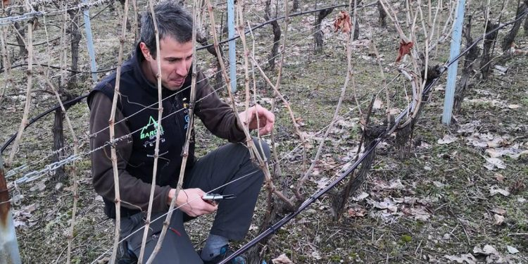 Edoardo Braga, la Valle d'Aosta in bottiglia