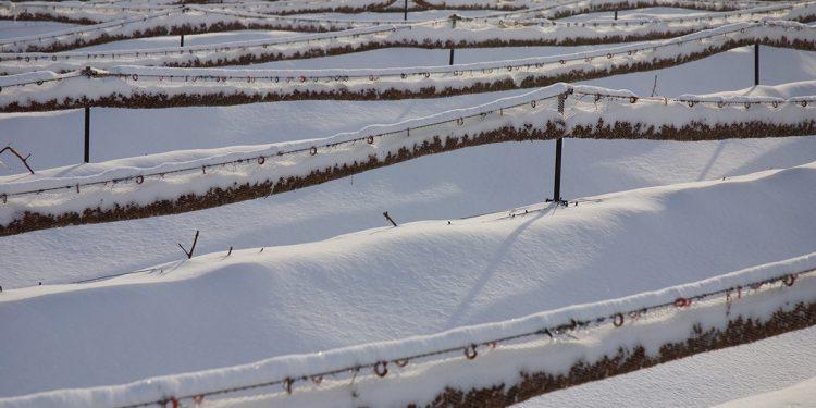 In Québec vino e sidro nascono dal ghiaccio
