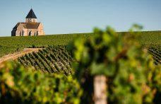 Chablis esclusa dalla Borgogna? L'Inao fa dietrofront