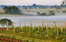 Alla scoperta dei vini scandinavi