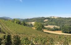 Hic et Nunc, stile puro del Basso Monferrato