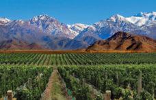 Uva criolla, il gusto della storia conquista l'Argentina