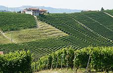 Piemonte: ottime performance per il Barolo, ma anche per i vini del Monferrato