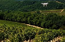 Viticoltura di precisione con l'aiuto dei droni