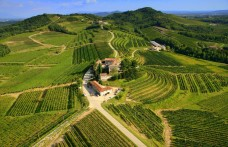 Generali punta sul vino passando per Expo