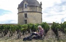 Simonit a Château Latour e Moët&Chandon