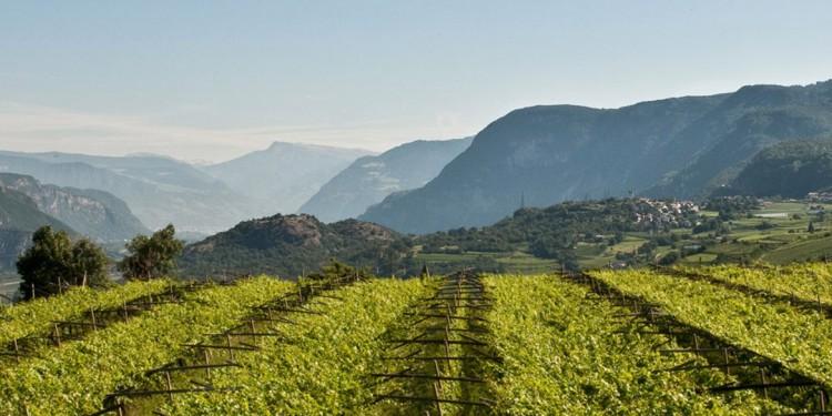 L'antico cru di Pinot nero Vigna Roccolo Hofstätter