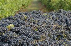 Produzione vinicola mondiale 2015. L'Oiv fa il punto