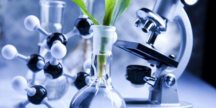 Biotecnologie della vite: il Congresso mondiale a Verona