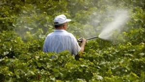 20120126041010_pesticida