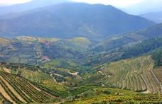 Il Portogallo studia gli autoctoni della Valle del Douro