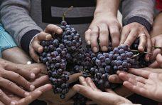 I Vini solidali sono anche buoni?