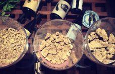 I vini di Predappio, culla storica del Sangiovese