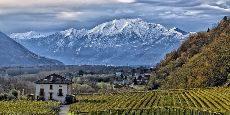 Nel vigneto Svizzera dominano Pinot nero e Chasselas