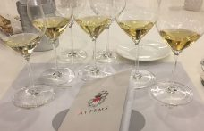 Cicinis di Attems, Sauvignon blanc figlio della ponca