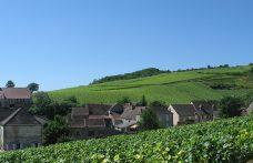 Pinot nero in Francia, casa dolce casa