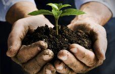 Vino biologico e non solo. Cresce l'agricoltura ecofriendly