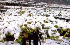 Prié blanc, vitigno eroico a 1250 metri