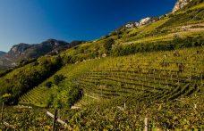 Le migliori annate dei vini Alto Adige: 2007-2016
