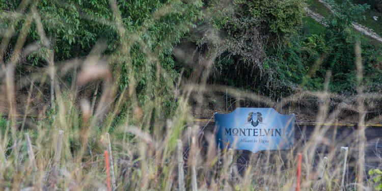 """Montelvini e il """"vigneto ritrovato"""" nel centro di Asolo"""