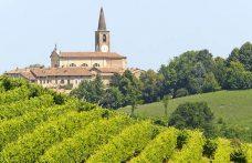 Nel Pavese risorge l'uva Mornasca