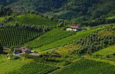Moscato di Scanzo: una rarità tutta lombarda