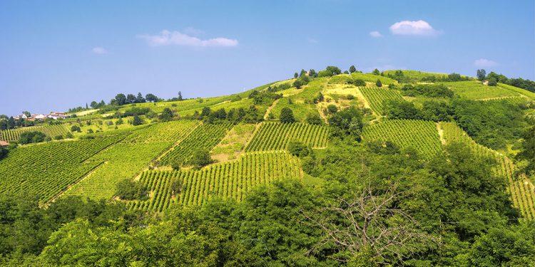 """Uva rara: un vino """"gastronomico"""", rustico e piacevole"""