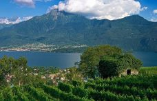 L'Alto Lario riparte con l'uva Verdese