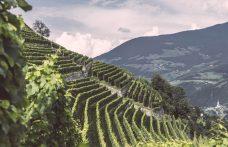 Da 500 a 1000 metri: i vini più alti dell'Alto Adige