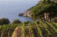 L'incredibile varietà dei vini di Maremma (e la vendemmia 2017)