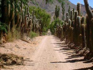 Lungo la ruta del vino di Salta