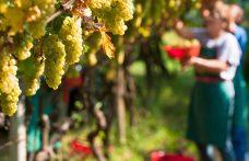 Cresce la produzione vinicola mondiale nel 2018. I dati Oiv in anteprima