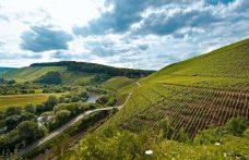 Il cambiamento climatico fa bene ai vini tedeschi