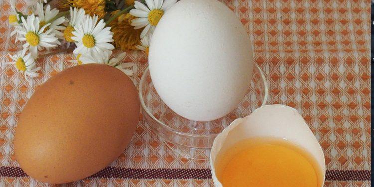 Uova, dentro al guscio un concentrato di proprietà