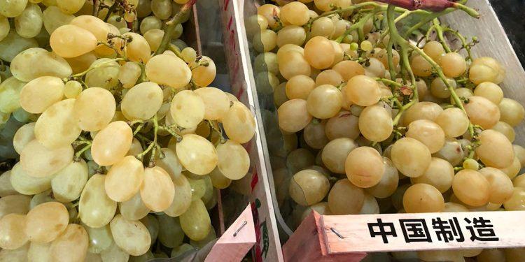 Cina primo produttore mondiale di uva (da tavola)