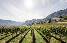 Alto Adige Wine Summit: l'armonia è nei contrasti