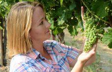 Cinque giovani donne per le vigne dello Stato di Washington