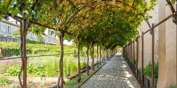 Vini Venezia: 5 denominazioni per un Consorzio