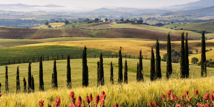 La Toscana tira. E il Morellino di Scansano la mette in etichetta