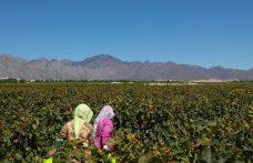 Ningxia: cresce la regione capofila del vino cinese