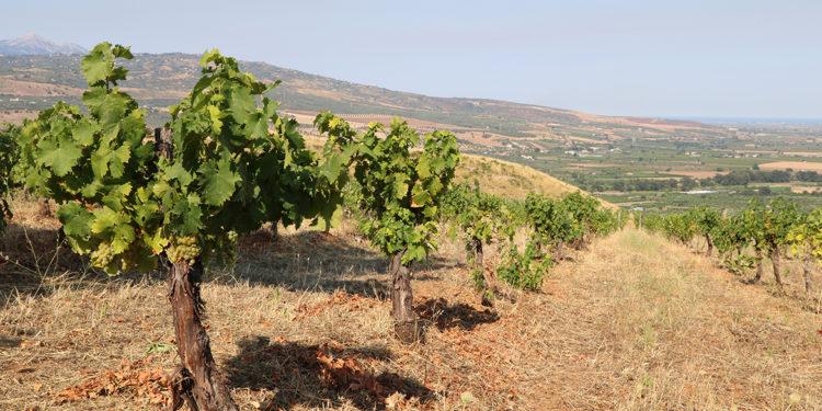 Masseria Falvo: progetto bio alle falde del Pollino