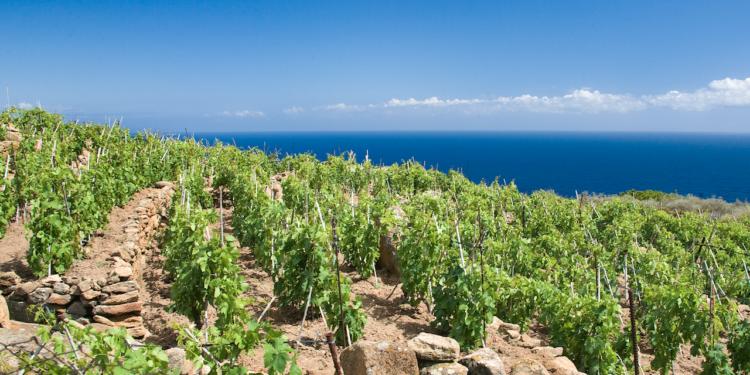 Cambia il disciplinare dei vini Maremma Toscana Doc