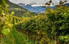 Gli altri spumanti: Alto Adige
