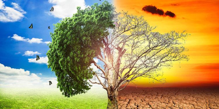 Terroir vs vitigno. Chi vince la sfida del climate change?