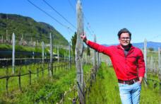 Hannes Andergassen, paladino del Pinot nero a Caldaro