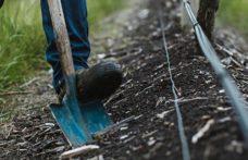 Il futuro della vite: agricoltura rigenerativa e ritorno al piede franco