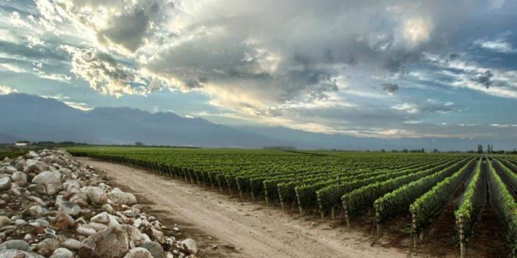 Il successo del vino argentino