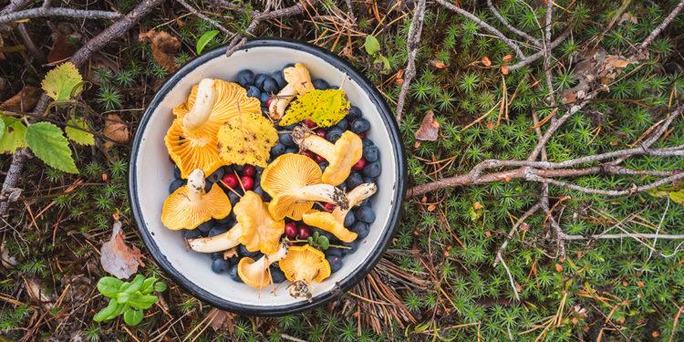 Dalla foresta al piatto con il foraging&co.